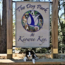 Sadie Rose at Keowee Key Dog Park